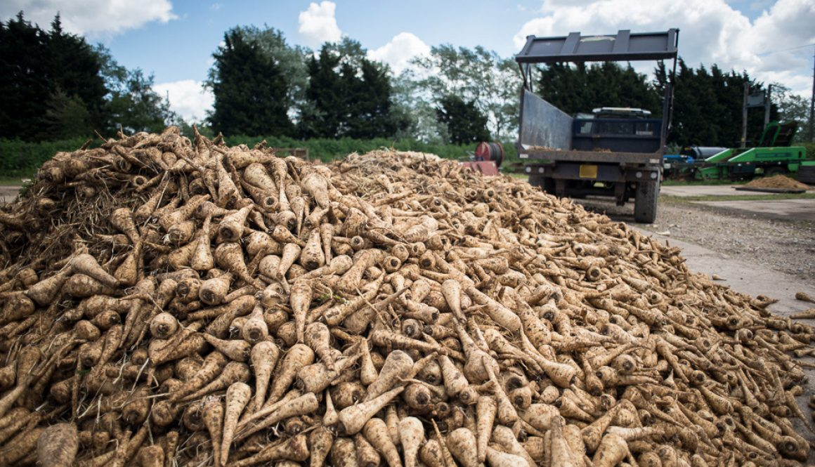 chris-king-photography_the-gleaning-network_parsnips2